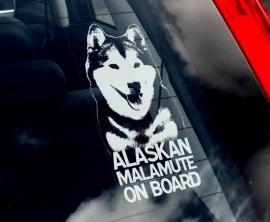 Alaskan Malamute V01