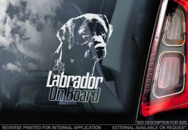 Labrador Retriever V07