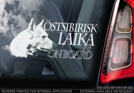 Oost-Siberische Laika - Ostsibirisk Laika  V03