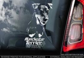 Manchester Terrier V02