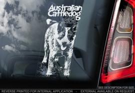 Australian Cattle Dog V04