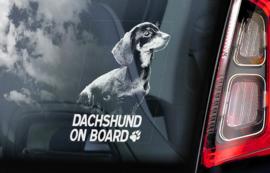 Dashond korthaar -  Dachshund  -V01