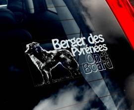 Pyreneese Herdershond  - Berger de Pyrenese - Pyrenean Shepherd  V01