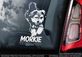 Morkie V01