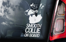 Schotse Herdershond (Collie) korthaar - Smooth Collie V01