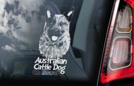 Australian Cattle Dog - Blue Heeler V06