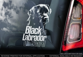 Labrador Retriever V06