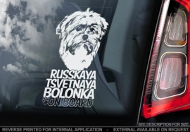 Russkaya Bolonka - Russian coloured bichon V01