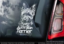 Australische Terrier - Australian Terrier V02