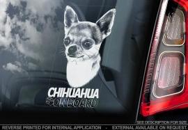 Chihuahua korthaar V03