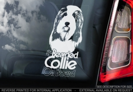 Bearded Collie V02