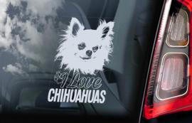 Chihuahua V10