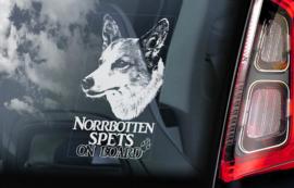 Norrbottenspets V01