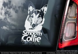 Schotse Herdershond (Collie) korthaar - Smooth Collie  V02