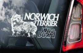 Norwich Terrier V01