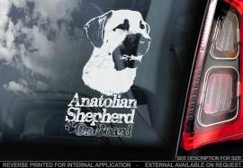 Anatolische Herder - Anatolian Sherpherd- Kangal V01