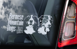 Berner Sennenhond - Bernese Mountain Dog V03