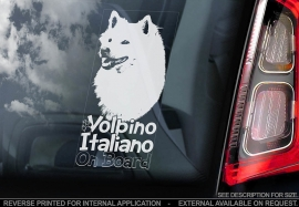 Volpino Italiano V01