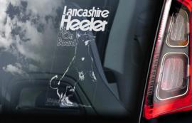 Lancashire Heeler V02