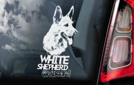 Zwitserse witte Herder - Vit Herdehund - White Shepherd V01