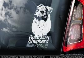 Australian Shepherd V04