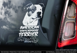 American Stafforshire Terrier  V6