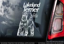 Lakeland Terrier V01