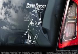 Cane Corso  V03