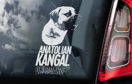 Anatolische Herder - Anatolian Sherpherd- Kangal V02
