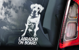 Labrador Retriever V01