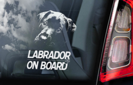 Labrador Retriever V02