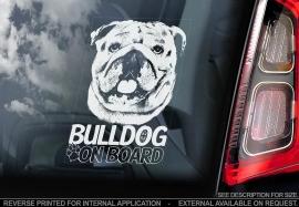 Engelse Bulldog - English Bulldog - V02