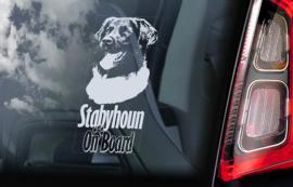 Friese Stabij - Stabyhoun V04