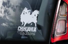 Chihuahua langhaar V07