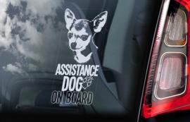 Geleide hond - Assistance dog - Guide Dog - Chihuahua V07