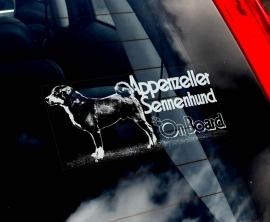 Appenzeller Sennenhund V01
