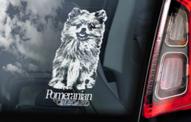 Pomeranian V01
