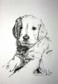 Wenskaart Golden Retriever 3 (pup)