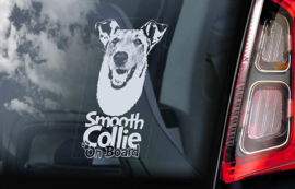 Schotse Herdershond (Collie) korthaar - Smooth Collie V03