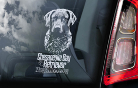 Chesapeake Bay Retriever V02