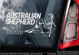 Australian Shepherd V6