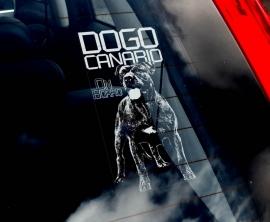 Dogo Canario ongecoupeerd - V02