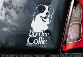 Border Collie V04
