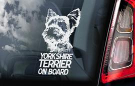 Yorkshire Terrier V01