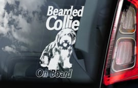 Bearded Collie V01