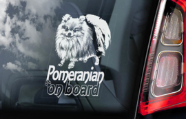 Pomeranian V02