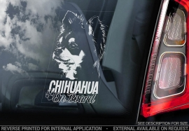 Chihuahua langhaar V04