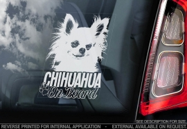 Chihuahua langhaar V05