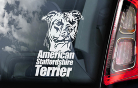 American Staffordshire Terrier V02