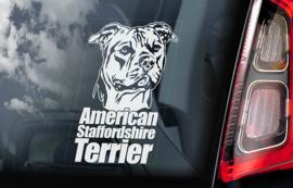 American Staffordshire Terrier V02